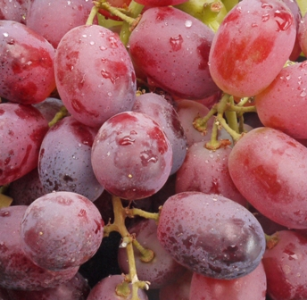 Grapes close up BG.jpg (1)